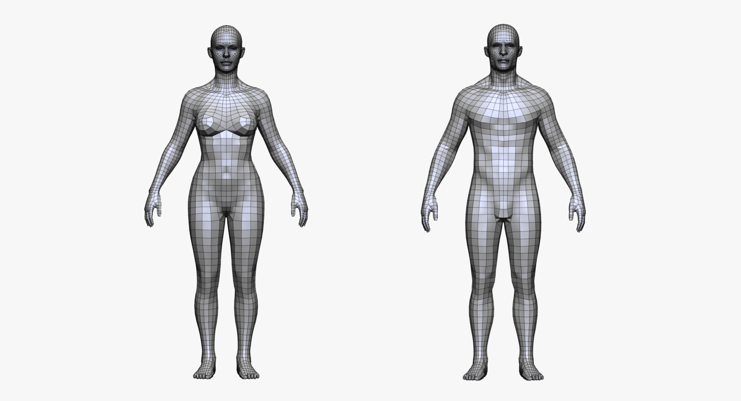 Realistic White Male and Female Low Poly Free 3D Model in Anatomy ...