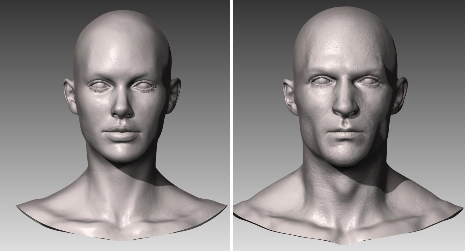 Realistic White Male and Female Head Bundle 3D Model in Anatomy 3DExport