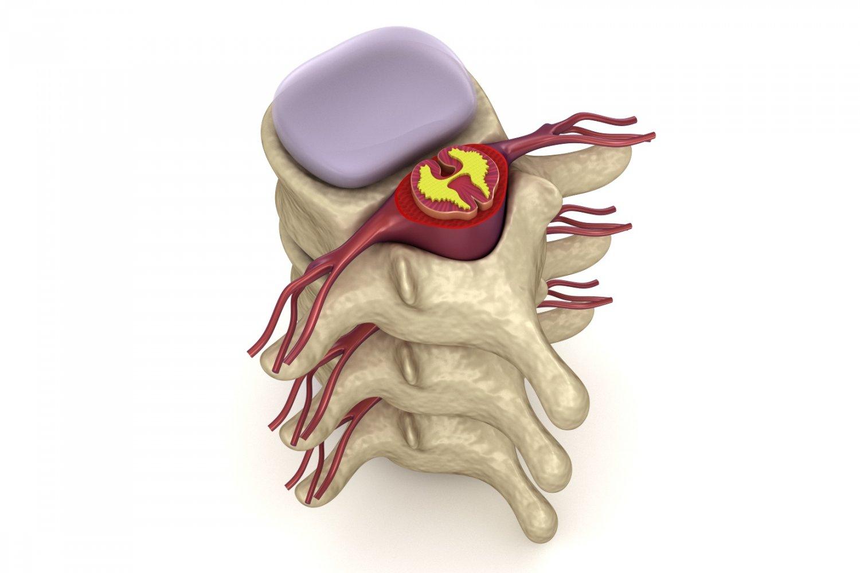 Human spine in details nerve disc 3D Model in Anatomy 3DExport