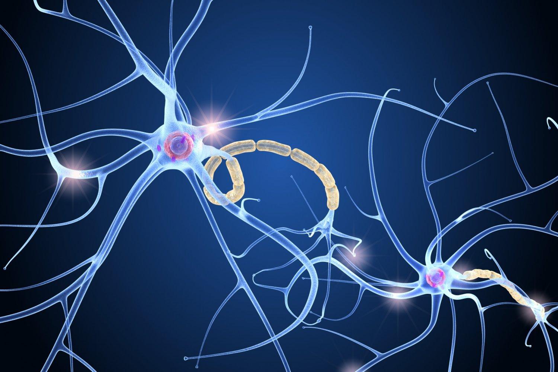 ما هي وظائف الجهاز العصبي