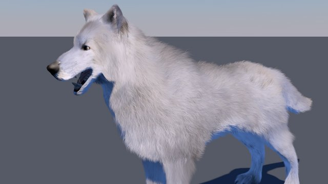 White wolf FUR RIGGED 3D Model in Dog 3DExport
