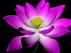 Lotus Flower Pink 3D Model