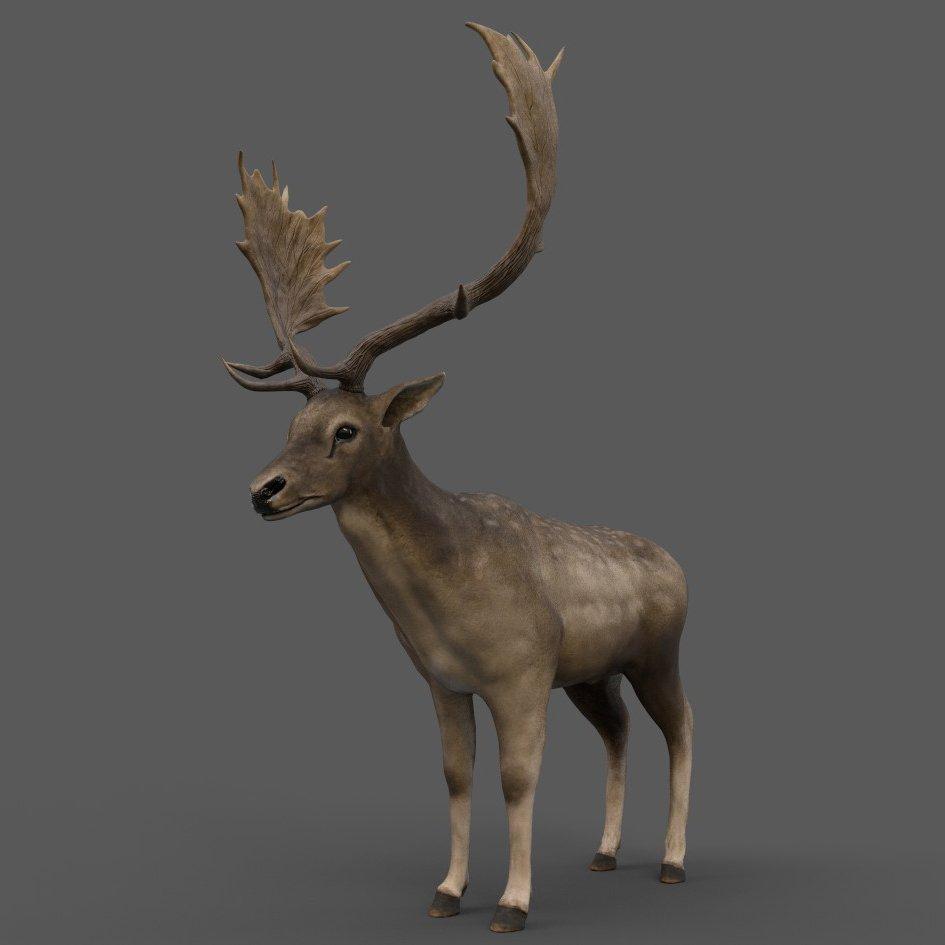 Fallow Deer 3D Model in Deer 3DExport