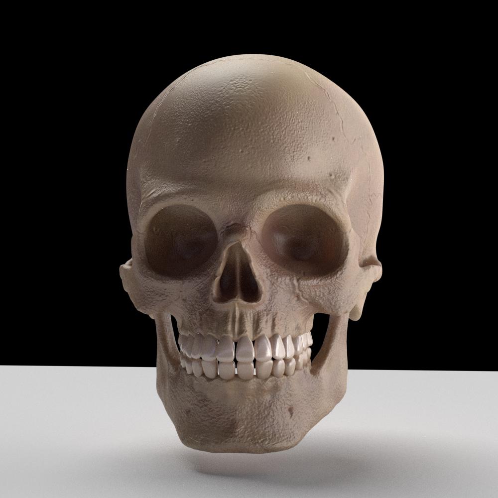 Skull 3D Model in Anatomy 3DExport