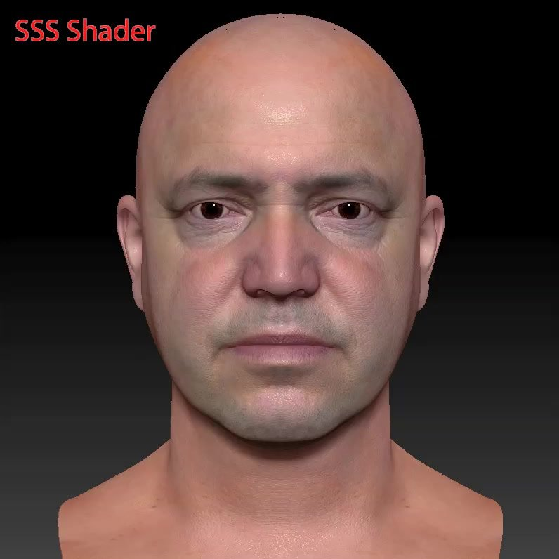 Male head ZTL 3D Model in Anatomy 3DExport