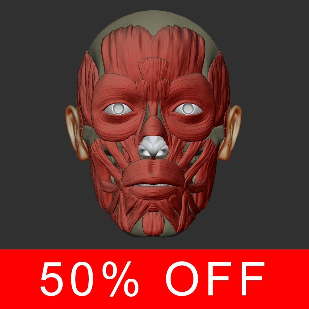 Head muscles 3D Model in Anatomy 3DExport