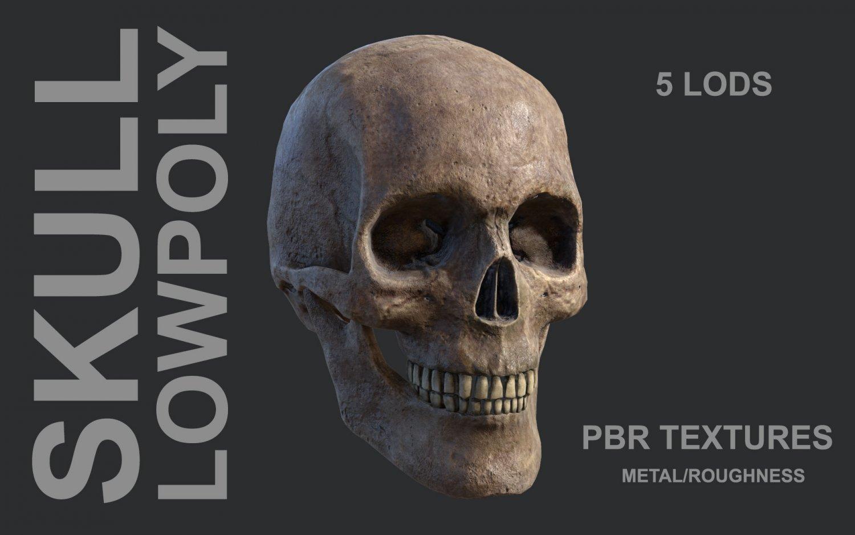 Lowpoly Skull 3D Model in Anatomy 3DExport