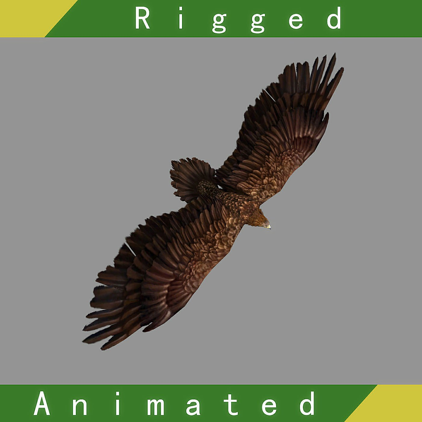 Eagle Rigged Animated 3D Model in Bird 3DExport
