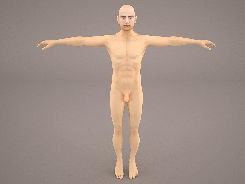 Man Anatomy 3d Model In Anatomy 3dexport