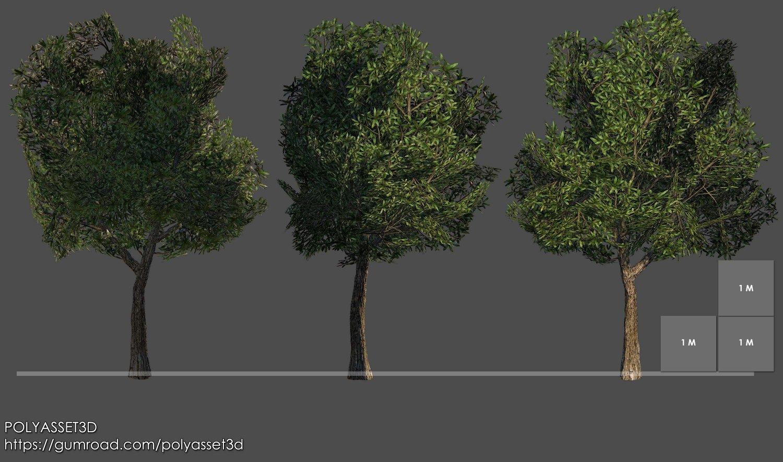 Mango Tree Pack Free 3D Model in Tree 3DExport