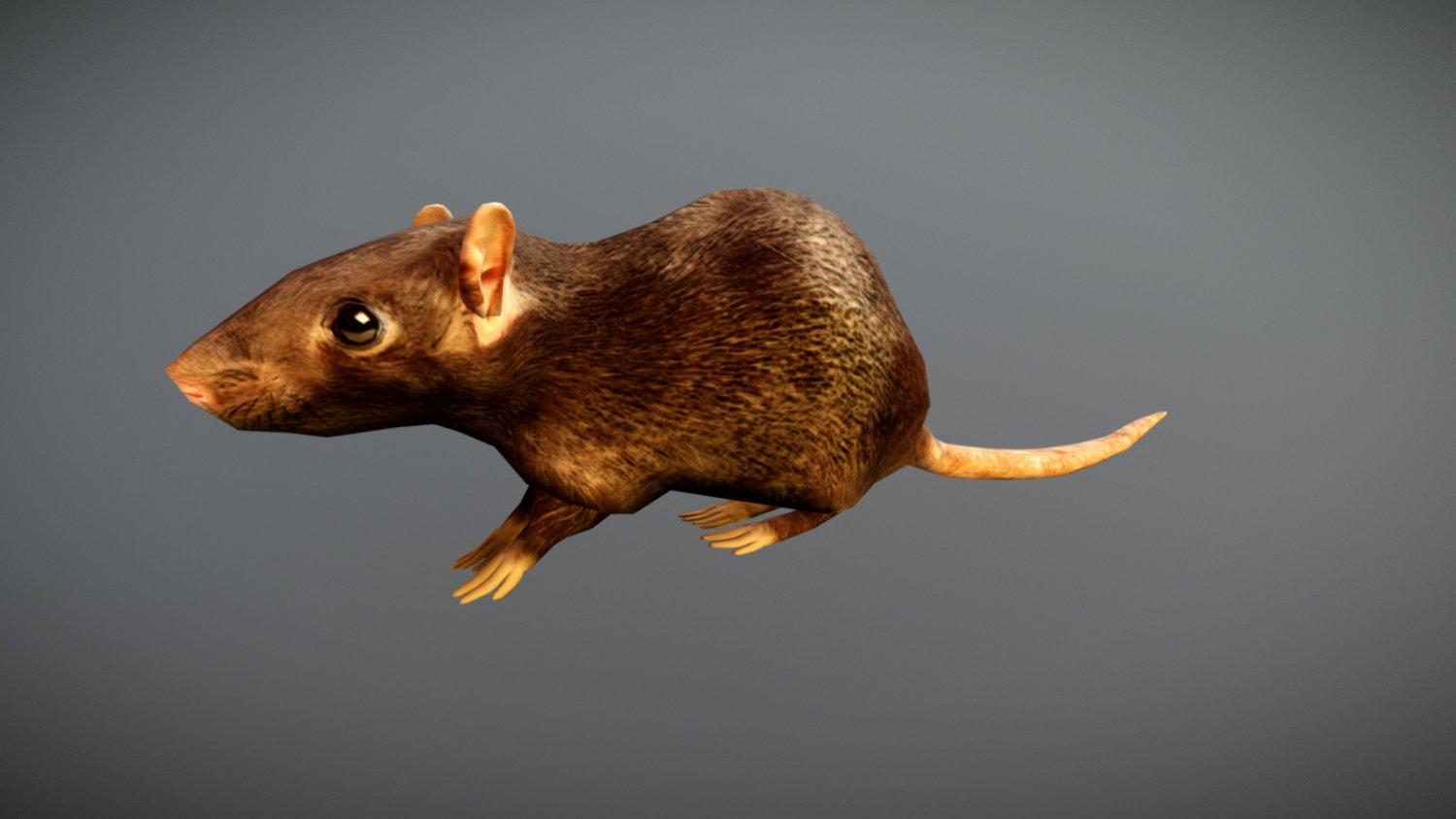 Animated Rat Free on Sketchfab 3D Model in Rodent 3DExport