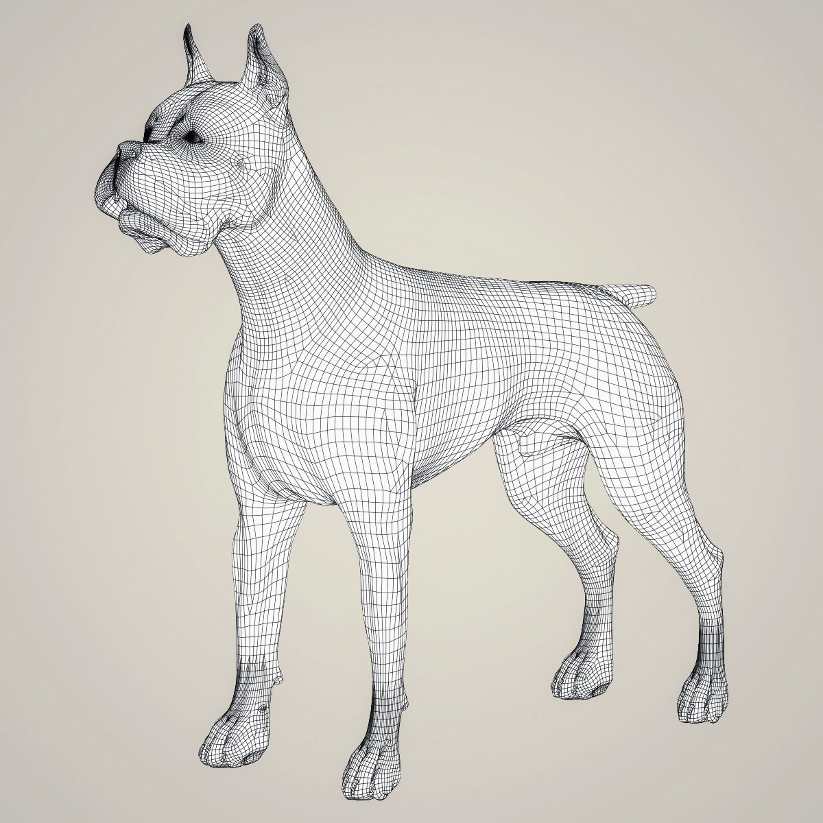Realistic Boxer Dog 3D Model in Dog 3DExport