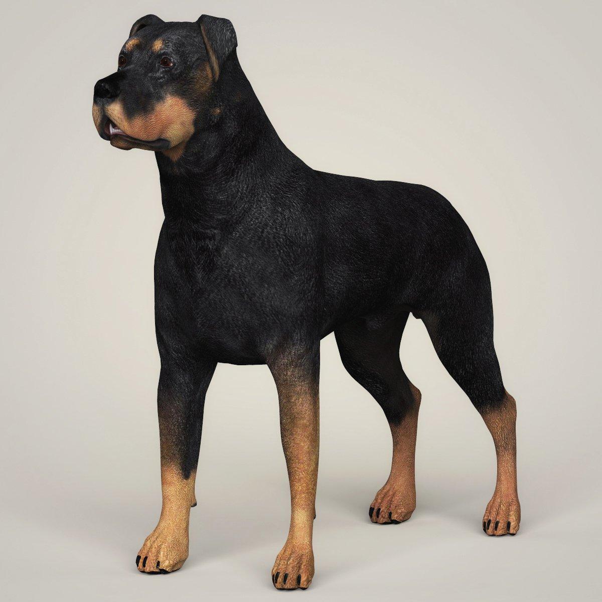Realistic Rottweiler Dog 3D Model in Dog 3DExport