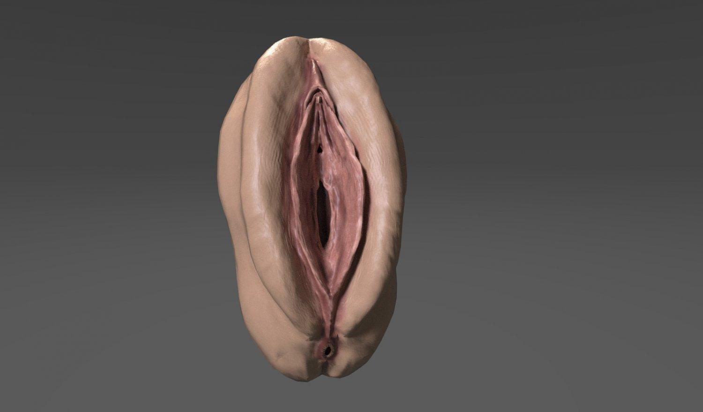 Female vagina models