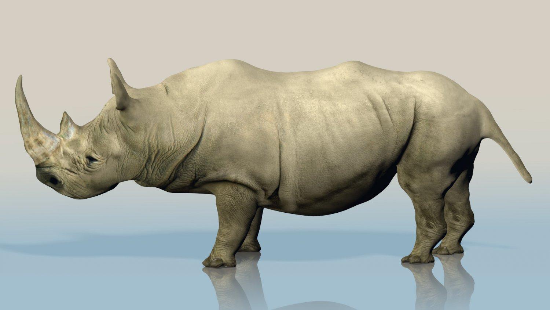 Rhino In Faune Realistic 3dexport Wild Modèle 3d 8n0Nwvm
