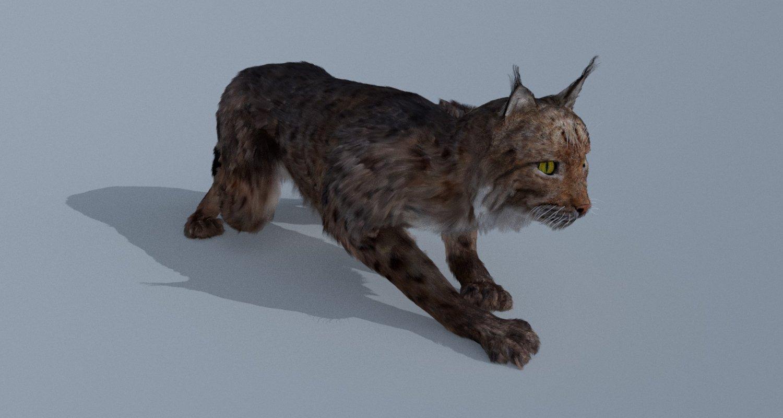 3d Model Lynx
