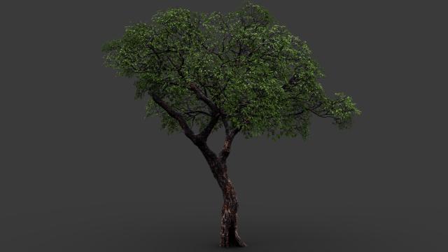 megascan 3D Models - Download 3D megascan Available formats