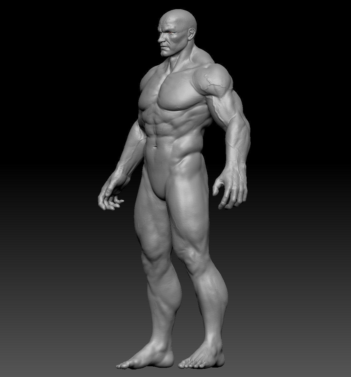 Male Anatomy Zbrush 3d Model In Anatomy 3dexport