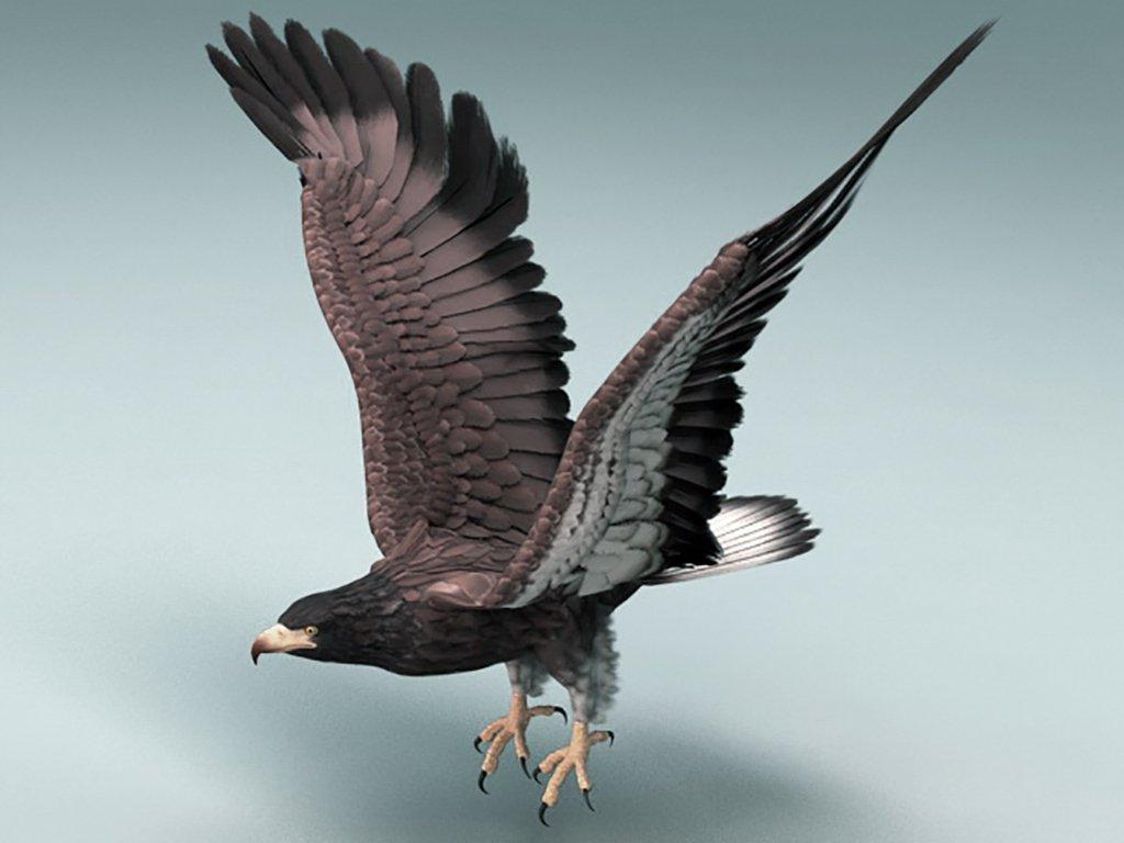 Eagle 3D Model in Bird 3DExport