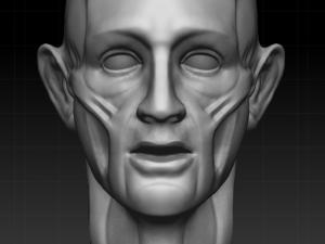 Anatomy - Download Anatomy 3DExport - 6