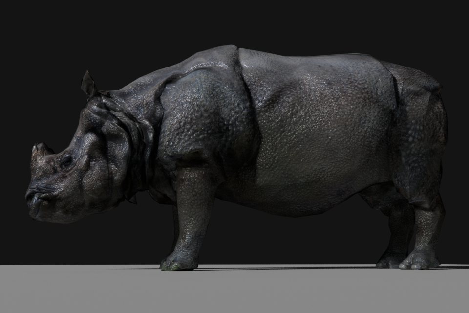 Photorealistic Rhinoceros Indien low-poly 3D Model in Other 3DExport