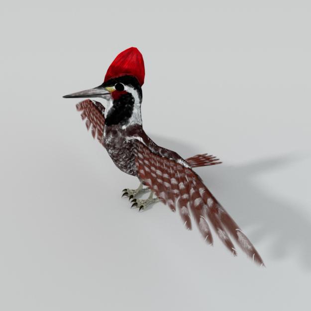 Woodpecker bird 3D Model in Bird 3DExport