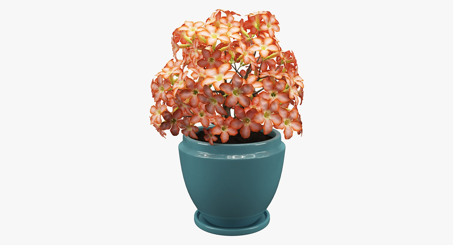 Realistic Potted Flower 007 3D Model & Realistic Potted Flower 007 3D Model in Flowers 3DExport